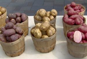 farbenfrohe Kartoffelsorten