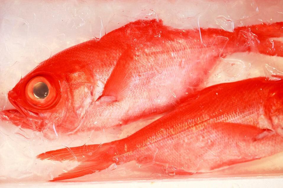 Alfonsino, Gourmetfisch Redfish oder Schleimkopf