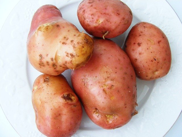 Kartoffelsorte Bamberger Hörnla