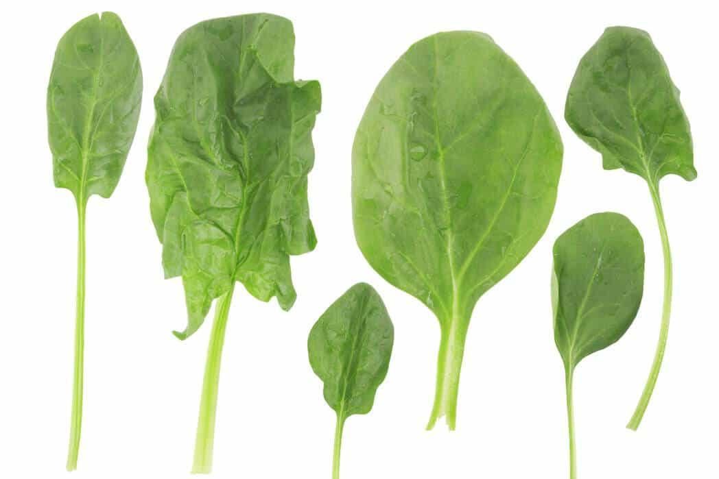 Spinat gibt es in verschiedenen Formen und Sorten