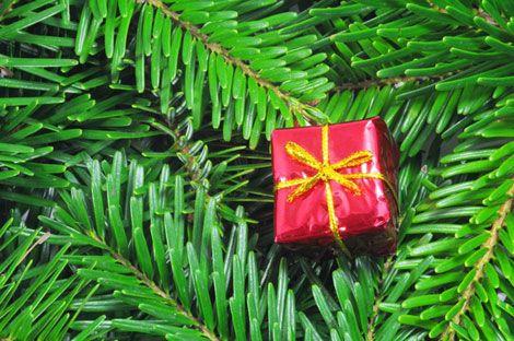 Adventszweig mit Geschenk