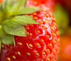 Leckere Erdbeeren für Erdbeer-Quarkknödel mit Pistazienbröseln