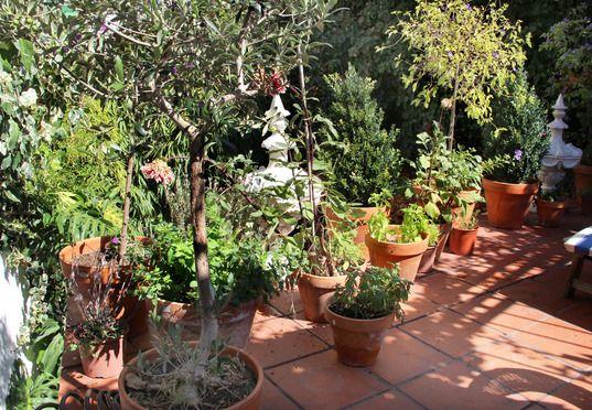 Kräuter im Topf auf einer Terrasse