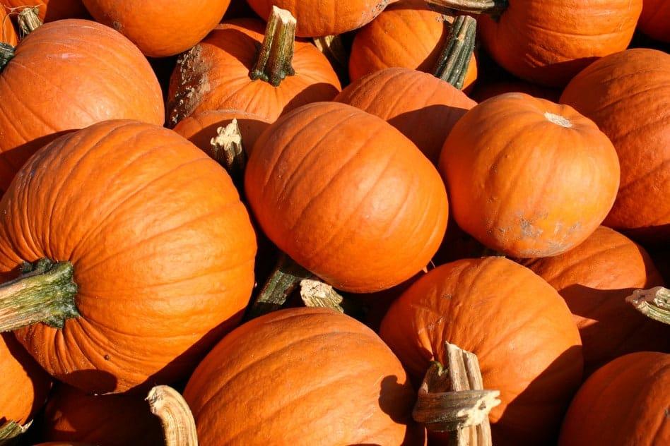 Kürbis – Das kulinarische Highlight im Herbst
